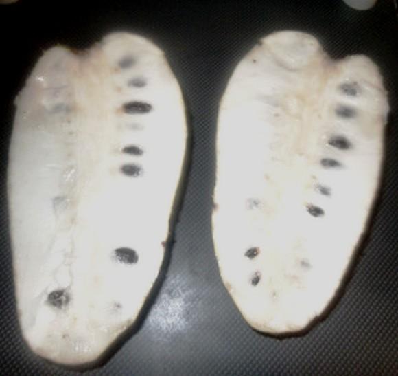 bien produire le manioc au cameroun
