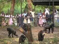 Limbe Wildlife Center