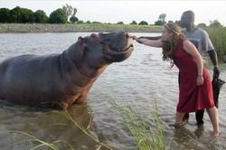Les hippopotames de Garoua