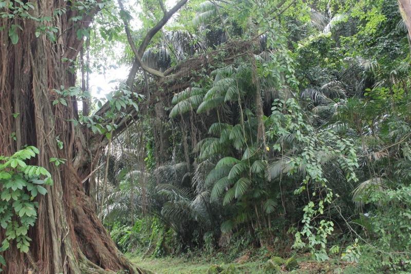 Jardin botanique de Limbé