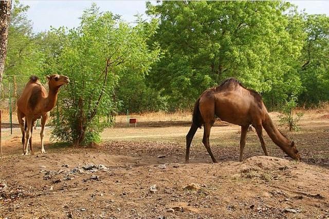 Le zoo de Garoua