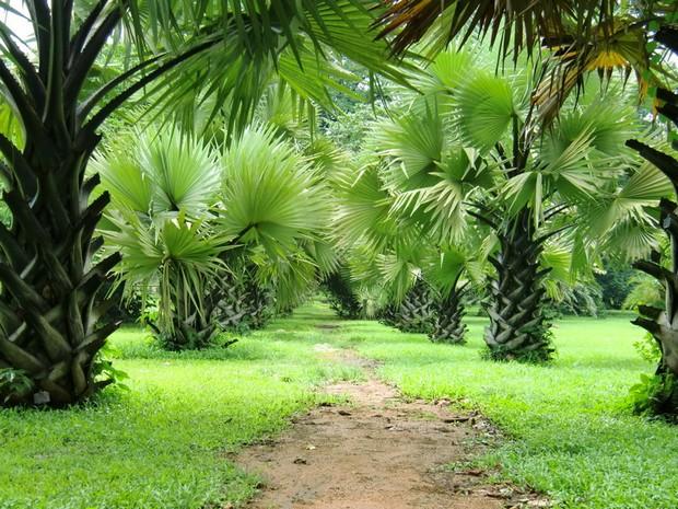 Limbé - Jardin botanique